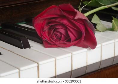dark red rose lying on piano keys