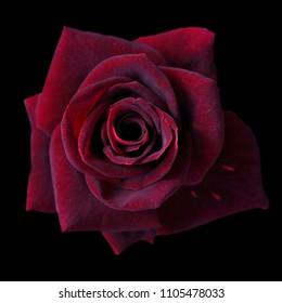 Beautiful Single Flowers Images, Stock Photos & Vectors
