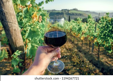 Dark red wine in glass of drinker over grapevine leaves in wineyard. Colorful vineyard landscape in Italy. Meadows of Tuscany during garvest.