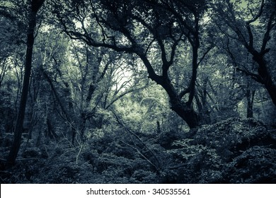 Dark Sasseto woods infested by ghosts.