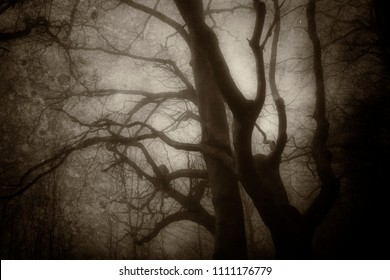 dark scary backlit tree silhouettes in old style photo of horror forest