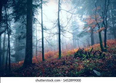 Dark scary foggy autumn season wood landscape. Concept Halloween holiday background.
