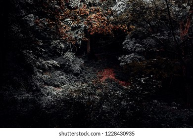 Dark scary forest