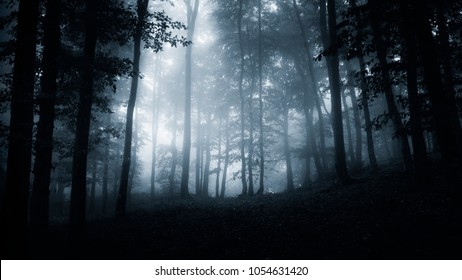 dark scary forest night landscape