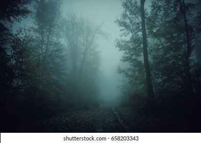 dark scary forest path at night surreal Halloween background
