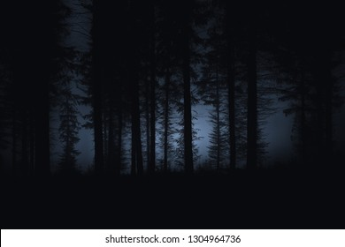dark scary forest with spooky trees