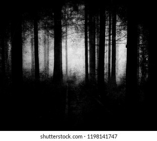 Dark scary forest wallpaper, spooky halloween background