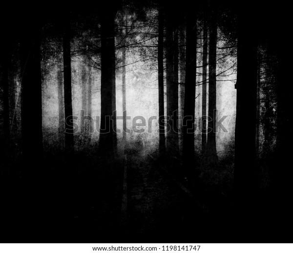 Dark Scary Forest Wallpaper Spooky Halloween Stock Photo