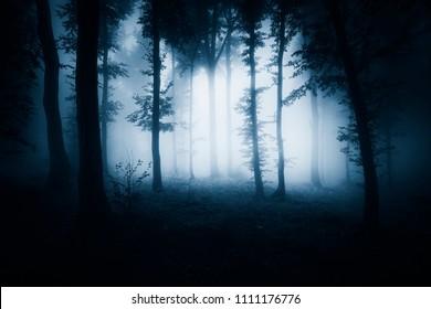 dark scary halloween woods, darkness landscape