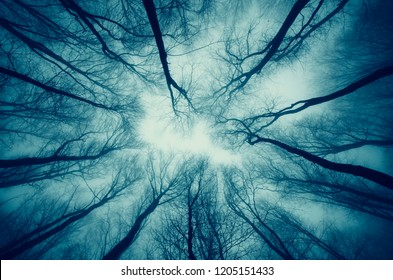 dark scary surreal forest dramatic perspective