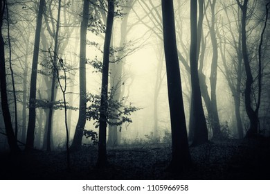 dark scary woods background