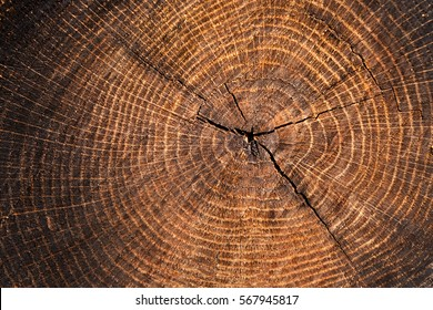 Dark shaded wood tree ring background texture. Wood rings with cracked surface.