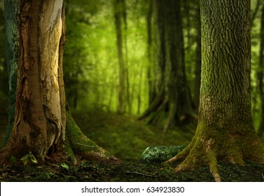 Dark shady forest, old trees with massive roots