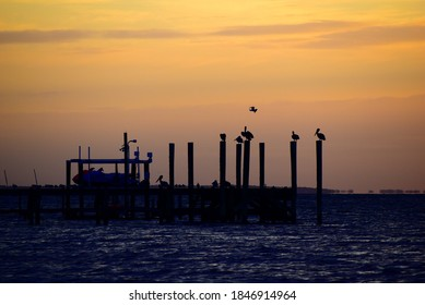 Dark silhouette of sea birds perched on pier at the beach with a golden sky over calm ocean water