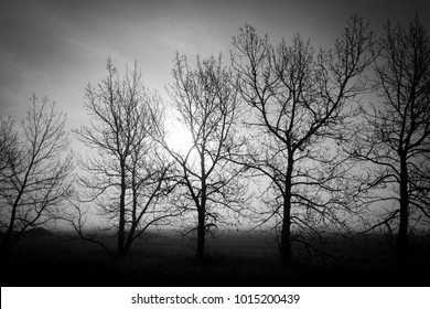Dark silhouette of trees surrounded in a foggy glow with the sun trying to breakthrough behind