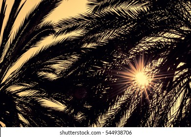 Dark silhouettes of date palms against bright colorful sky with sun rays seen through the leaves