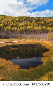 Dark small pond near deep forest in Transylvania