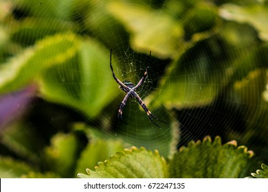 Dark spider in the middle of his web in the nature