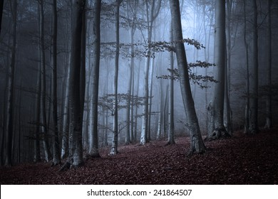 Dark spooky forest in a foggy autumn day