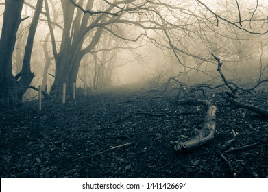 A dark, spooky forest path on a cold foggy winters day. With a muted, blue edit.