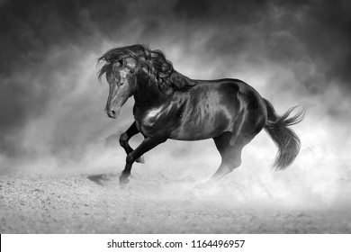 Dark stallion free in motion. Black and white