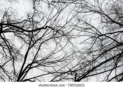 The dark stems with many branches and twigs of the bare deciduous trees are photographed against the overcast sky from below.