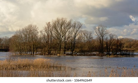 Dark storm clouds over marsh with bare winter trees and reed in Bourgoyen nature reserve, Ghent, Flanders, Belgium