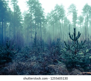 A dark Swedish forest on a autumn afternoon