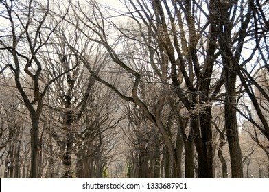 A dark and thick canopy of leafless trees hibernating in winter lines a park walkway leading up to buildings in the background.