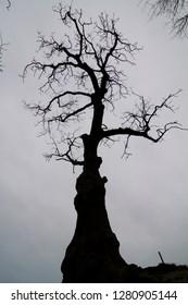 dark tree against the sky