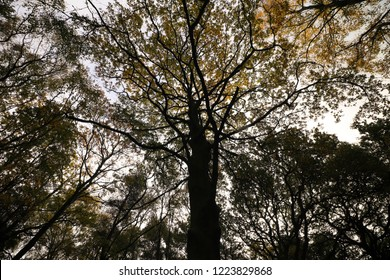 Dark tree at Autumn