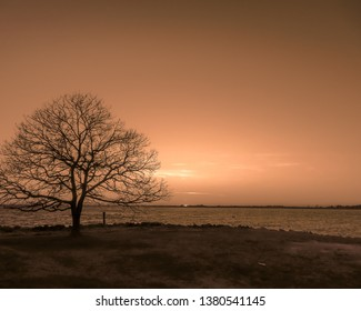 dark tree and beautiful sunset on Gotland