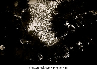 Dark tree leaves with branches in the afternoon