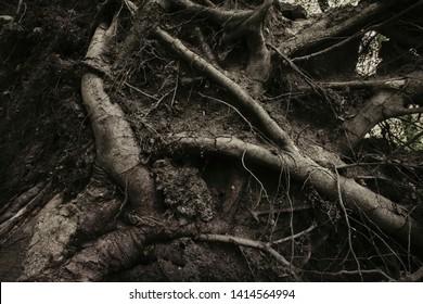 dark tree roots horror background