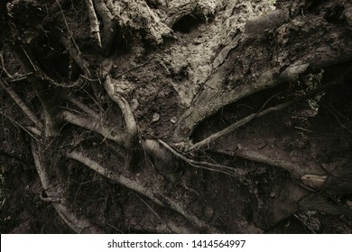 dark tree roots on forest ground, roots texture background