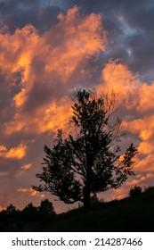 Dark tree silhouette against sunset cloudy sky