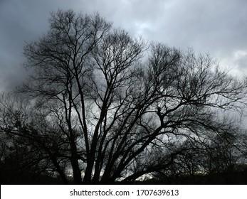 dark tree at winter's evening