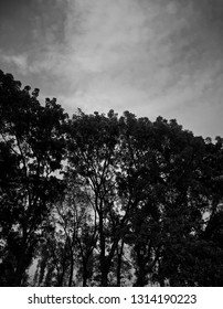 Dark trees around a forest area with sky background photo