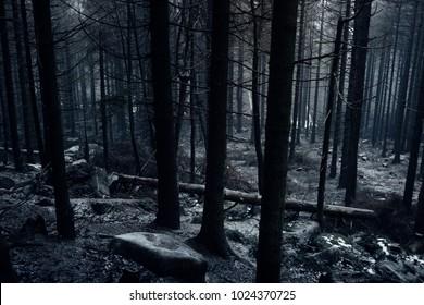 Dark trees block the view