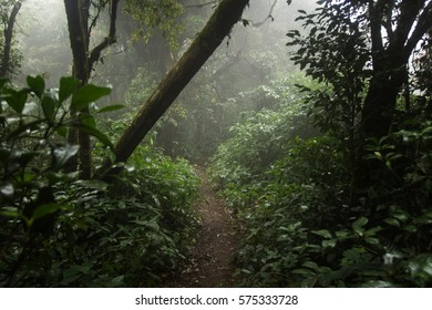Dark tropical forest in Thailand.