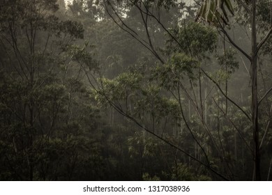 Dark tropical jungle rainforest scenery during tropical rain