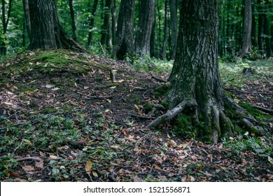 Forest Floor Images Stock Photos Vectors Shutterstock