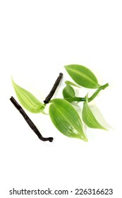 dark Vanilla sticks with green vanilla leaves on a light background