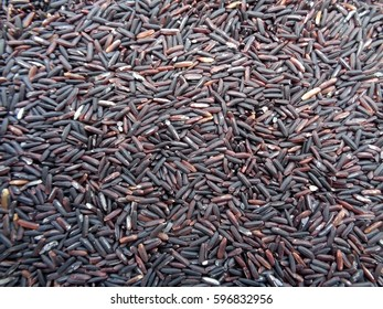 Dark Violet Color Rice-berry Rice, Raw Rice, Uncooked, for Background and Pattern