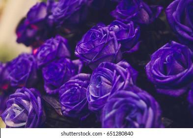 Violet Rose naked 815