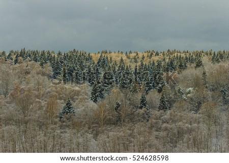 dark winter forest stock photo edit now 524628598 shutterstock