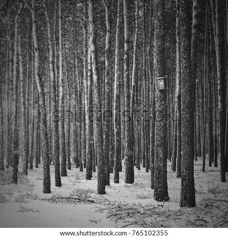 dark winter forest stock photo edit now 765102355 shutterstock