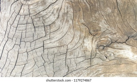 Dark wood texture or wood gain image use for web design and wood background