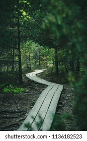 dark wooden footpath in swamp with beautiful evening sun light in green foliage of summer bog. boardwalk in perspective view - vertical, mobile device ready image
