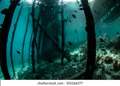 Dark, wooden pilings support a jetty in Raja Ampat, Indonesia. Jetties and piers are often areas where many fish and invertebrates aggregate due to the vertical habitat and shadowed niches.